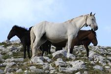 Free Group Of Wild Horse Stock Photography - 15582612