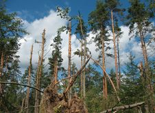 Free Forest After Hurricane Stock Photography - 15583742