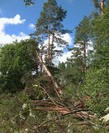 Free Forest After Hurricane Stock Photos - 15583753