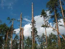 Free Forest After Hurricane Stock Images - 15583764