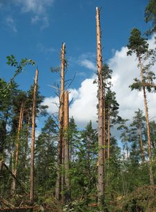 Free Forest After Hurricane Royalty Free Stock Photos - 15583778