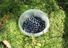 Free Bucket With Blueberries Stock Photos - 15583803