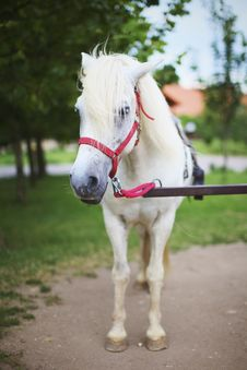 Free White Pony Horse On Marry Go Round Royalty Free Stock Images - 15584949