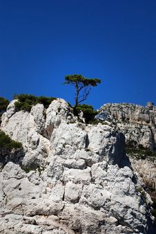 Free Lonely Tree On The Rock At Calanque In France Royalty Free Stock Photo - 15585665