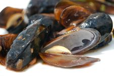Free Mussel Royalty Free Stock Photo - 15586125