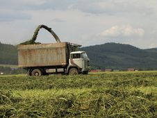 Free Harvesting Stock Images - 15587184