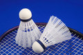 Free Badminton Shuttlecock And Racket Royalty Free Stock Image - 15594536