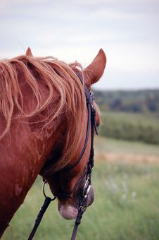 Free Welsh Cob Pony Stock Photos - 15592443