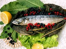 Free Fish Food 1 Royalty Free Stock Image - 15593796