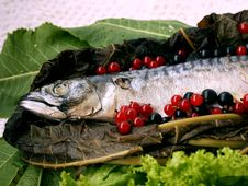 Free Fish Food 3 Royalty Free Stock Photography - 15593847