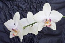 Orhid Stock Photo