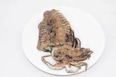 Free Mediterranean Cuttlefish Stock Image - 15599761