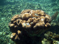 Free Fancy Underwater Coral Stock Images - 1564164