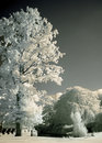 Free Park Trees In Infrared Stock Photos - 1565923