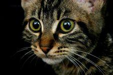Free Feline Look Stock Image - 1560091