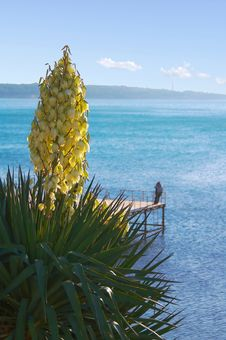 Free Flowered Palm Royalty Free Stock Images - 1561069