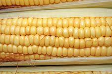 Free Corn Cob Stock Image - 1563391