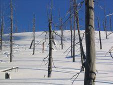 Free Tree Tracks Stock Photo - 1568800