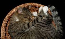 Free Sleeping Cat Royalty Free Stock Photos - 1569688