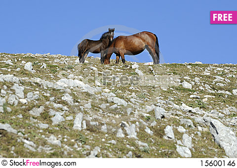 Free Horse With Colt Royalty Free Stock Image - 15600146