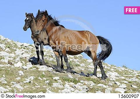 Free Mare And Colt Royalty Free Stock Photography - 15600907