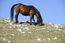 Free Wild Stallion Royalty Free Stock Image - 15600106