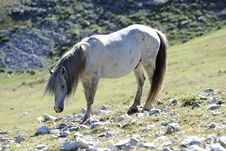 Free Wild Horse Stock Photography - 15600722