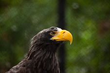 Free Bald Eagle Stock Image - 15602851