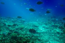 Free Astonishing Undersea World Of Red Sea. Stock Photo - 15603850