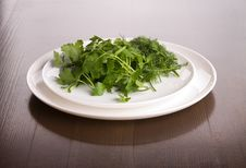 Free Dish With Parsley And Fennel Stock Image - 15604011