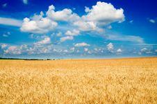 Free Amazing Yellow Field Of Wheat. Royalty Free Stock Photos - 15604168