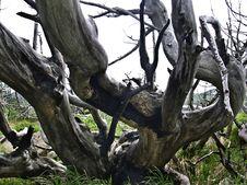 Free Dead Trees Stock Image - 15604741