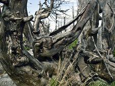 Free Dead Trees Stock Photo - 15604910