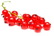Free Red Currant Stock Image - 15605831
