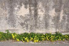Free Wallflower Royalty Free Stock Images - 15608519