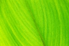 Free Green Leaf With Veins, Close Up Stock Photography - 15608852