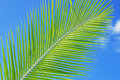 Free Green Leaf Against Blue Sky Stock Image - 15610351