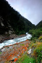 Free Lichen On The Banks Of Otira River Royalty Free Stock Photos - 15616208