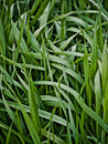 Free Plots Of Grass Stock Photo - 15618800