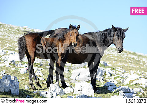 Free Horse And Colt Stock Photos - 15613873