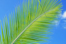 Free Green Leaf Against Blue Sky Stock Image - 15610351