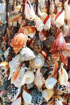 Free Seashells Hung Royalty Free Stock Image - 15610976