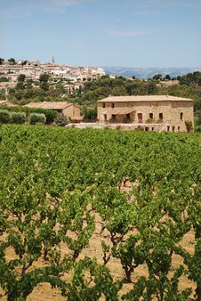 Vineyard In Provence With  Village On Back Stock Images