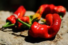Free Red Chili Pepper Stock Images - 15612034
