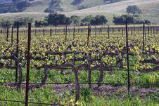 Free Vinery Stock Photos - 15612273