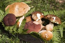 Free Mushrooms Stock Photos - 15613173