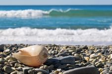 Free Large Shell On Rocky Beach Royalty Free Stock Photos - 15613368
