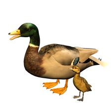 Free Duck With Child Royalty Free Stock Image - 15613606