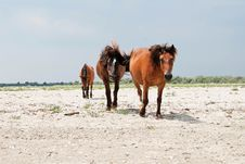 Free Three Horses On A Beach Royalty Free Stock Photo - 15616775