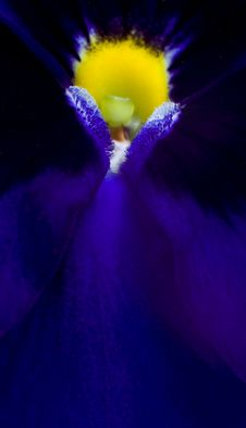 Free Violet Abstract Flower Royalty Free Stock Photo - 15618165